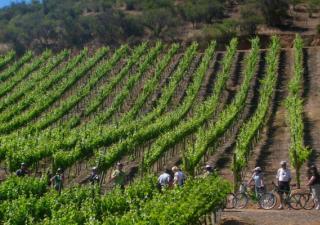 Gastronomisk cykel resa i Salento i Apulien, Italien