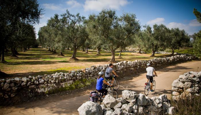 Cykeltur bland olivträd i södra italien